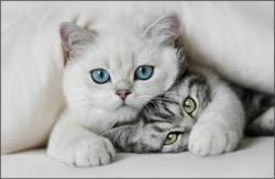 pisicutze