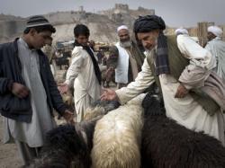 veterinar in Afganistan