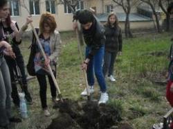 voluntariat liceu