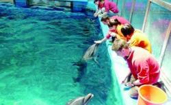 delfinii de la Constanta