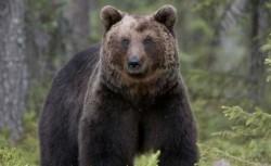 o ursoaica