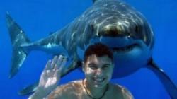 rechinilor le place