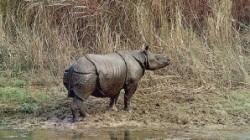 rinocer de Java