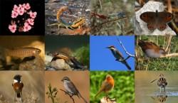 Biodiversitatea, peisajele si produsele traditionale transilvanene sunt acum online pe Google Cultural Institute