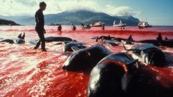blestemul balenelor