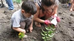cei mici si ecologia