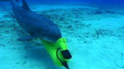 delfini ucigasi