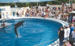 dresura delfini