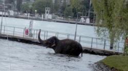 elefant neastamparat