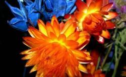 expo flora