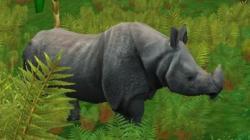 extinctie rinoceri