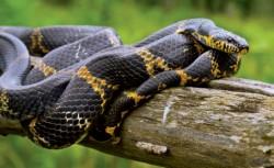 Ce descoperire surprinzatoare au facut naturalistii despre serpii uriasi?