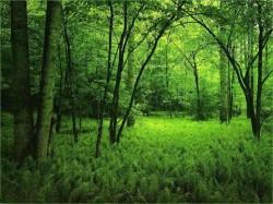 Salaj: Padurea dispare vazand cu ochii