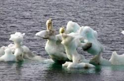 sacrificii pentru mediu