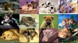 specii de animale