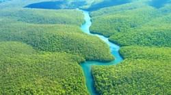 Tribul rupt de lume din Amazon a disparut dupa un atac armat al traficantilor de droguri