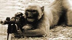 antreneaza maimute