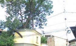 casa cu copaci
