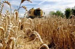 cereale criza
