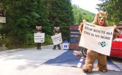 ecologistii au blocat soseaua