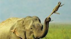 elefantul si soparla