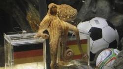 misterul caracatitei
