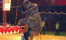 show elefanti