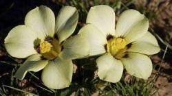 specie de flori