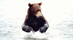 ursi la racorit