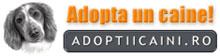 adoptii-caini220x56225