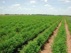 Rezultatele consultarii publice privind viitorul agriculturii ecologice