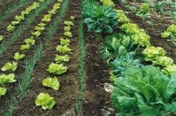 PNDR 2014-2020 prevede o alocare de 200 de milioane de euro pentru agricultura ecologic?