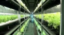 legume hi-tech