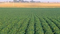 Zeci de fermieri interesati de programul Donau Soja