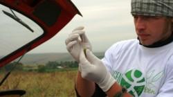 cultura ilegala de soia modificata genetic