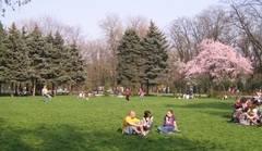 Numarul copacilor din doua sectoare ale Capitalei s-a triplat