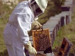 Doi apicultori au solicitat sprijin pentru îmbunătăţirea calităţii produselor