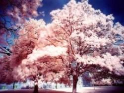 Arbori în locul lampadarelor