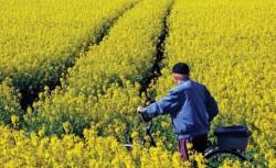 România poate contribui la o produc?ie sustenabil? de biocombustibili în UE