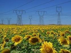 A V-a Conferinţă Internaţională - Bioenergia în România