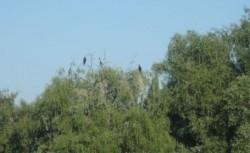 La colonia de pe Lacul Chiriloaia vedeţi cele mai multe specii de păsări şi nuferi