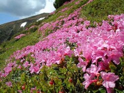 Concurs pentru iubitorii de natura in muntii Cindrel