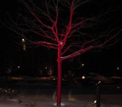 Nanoparticulele de aur ar putea transforma copacii in stalpi de iluminat