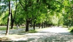 Dinamoviştii se gîndesc la natură! Au plantat copaci la Bragadiru