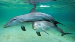 Remus Cernea propune un proiect de lege prin care delfinii s? fie recunoscu?i drept persoane non-umane