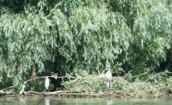 Mirificul peisaj al deltei, invită turiştii