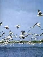20 de gaste din Delta depistate cu virusul gripei aviare