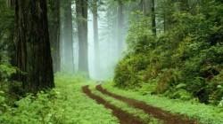 Peste 80 de milioane de euro pentru proiecte de mediu in Cluj
