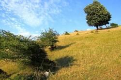 Parcul Naţional Munţii Măcin