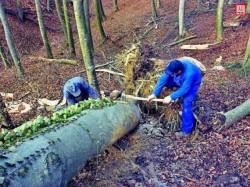 Profituri uriase din afaceri cu lemn